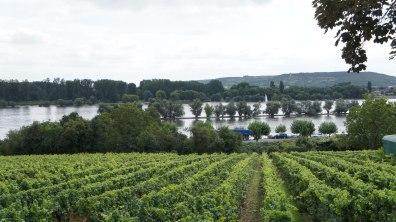 Вот так выглядел наш маленький городок - сплошные виноградники и Рейн.